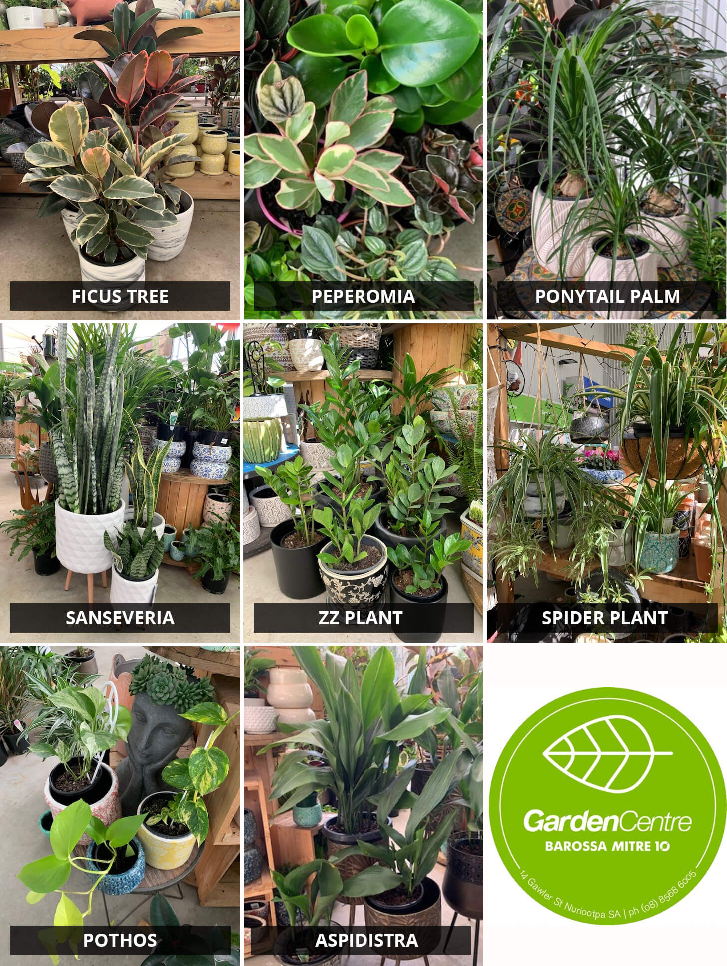 All About Inside - Top Houseplants